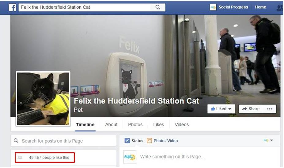 Facebook to Fame – Felix The Huddersfield Station Cat Hits The Big Time