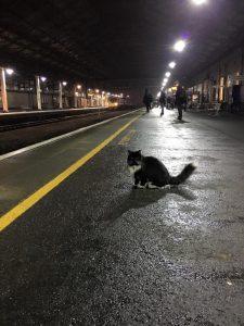 Felix-The-Huddersfield-Station-Cat-On-The-Platform