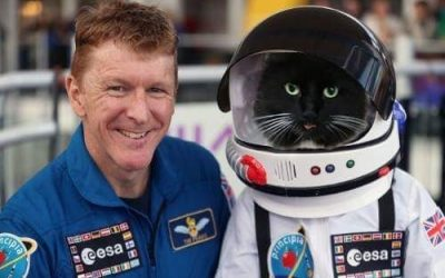 European Space Agency & Felix the Huddersfield Station Cat team up in Human / Feline Space trial