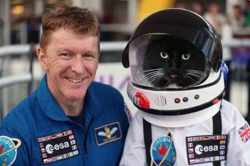 European Space Agency & Felix the Huddersfield Station Cat team up in Human / Feline Space trial